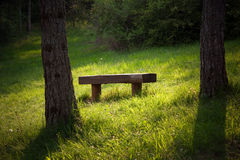 Bench in forest Stock Photography