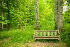 Bench in the forest Stock Image