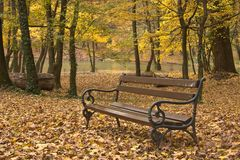 Bench in forest Royalty Free Stock Photo