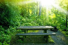 Bench in Forest Royalty Free Stock Image