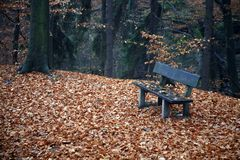 Bench in the forest in autumn Royalty Free Stock Photos