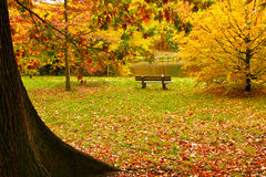 Bench in the forest in autumn Royalty Free Stock Photography