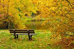 Bench in the forest in autumn Royalty Free Stock Images
