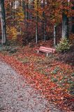 Bench in the forest in forest during autumn. Bench in the forest, , autumn foliage, pathway Stock Image