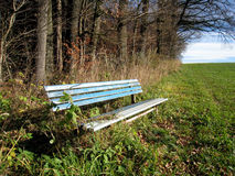 Bench at the forest edge (1) Stock Image