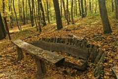 Bench in the forest Royalty Free Stock Photo