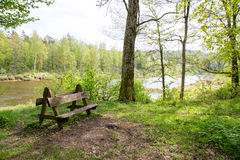 Bench in the forest Royalty Free Stock Photography