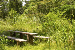 Bench in the forest. Old wooden bench in the forest Royalty Free Stock Photography