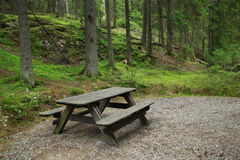 Bench in the forest Stock Images