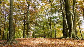 A bench in the forest Royalty Free Stock Photos