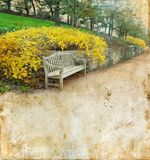 Bench and Forsythia on a Grunge background stock photo