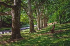 Bench in the fresh green spring scenery lit by sun on a forest path royalty free stock photo