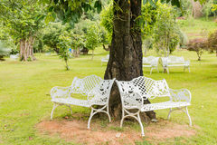 Bench in  garden background Stock Image