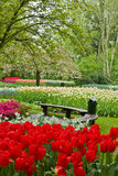 Bench in garden Keukenhof Stock Image