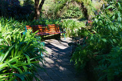 Bench in the garden. Tropical park landscape royalty free stock photography