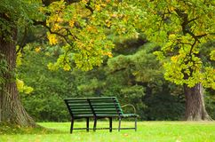Bench in a gardens stock image