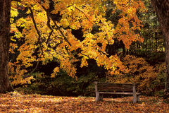 Bench in Golden Light Stock Images