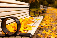 Bench with golden maple leaves Stock Images