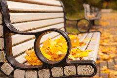 Bench with golden maple leaves Royalty Free Stock Photos