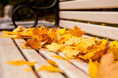 Bench with golden maple leaves Royalty Free Stock Image