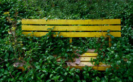 Bench with grass. Bench full with grass and wild plants cuddle it royalty free stock photography
