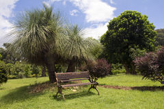 Bench with Grass tree ,Black boy. Or Xanthorrhoea is a native Australia plant royalty free stock image
