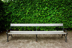 Bench in a green city garden with the bushes Royalty Free Stock Photos