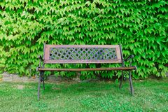 Bench with green foliage in the background.  Stock Photography