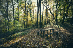 Bench in green forest Stock Photos