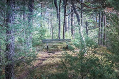 Bench in the green forest Royalty Free Stock Photography