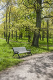 Bench In a Green Park Royalty Free Stock Photo