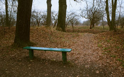 Bench at the grove Royalty Free Stock Images