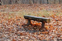 A bench that has been standing in the forest for many years stock photos