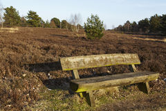 Bench into heathland in spring Stock Images