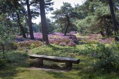 Bench on an idyllic place in a heather landscape. On the Veluwe in the Netherlands Stock Photos