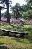 Bench on an idyllic place in a heather landscape. On the Veluwe in the Netherlands Stock Photo