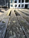 Bench   (22) Royalty Free Stock Images