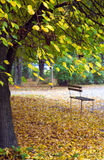 Bench In Autumn Park Royalty Free Stock Photos