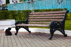 Free Bench In The Park And A Black Cat Royalty Free Stock Photo - 129103695