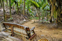 The bench in jungle. Vallee de Mai, Seychelles royalty free stock photo