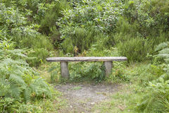 Bench in Killarney National Park Royalty Free Stock Images