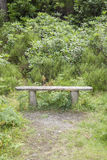 Bench in Killarney National Park Royalty Free Stock Photography