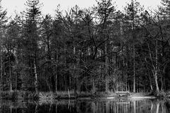 A bench at a lake surrounded by leafless trees. In black and white stock images
