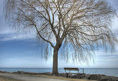 Bench By The Lake Under A Willow Tree Royalty Free Stock Photos