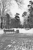 Bench and lanterns in winter park black and white Stock Images