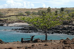 Bench at Lapakahi State Historical Park Royalty Free Stock Images