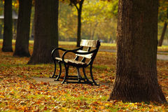 Bench And The Leafs. A bench surrounded by autumn leafs in the park royalty free stock photography