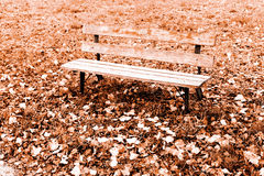 Bench with leafs in autumn Stock Photo