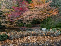 Bench at Lithia Park by the lake. Empty bench at Lithia Park by the lake in Ashland, Oregon, USA, featuring red and yellow leaves in the Autumn royalty free stock images