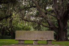 Bench in Live Oak Grove Royalty Free Stock Photo